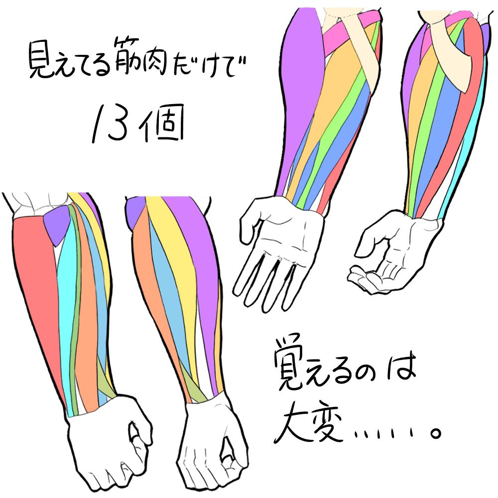 筋肉イラスト 筋肉 描き方