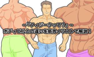 〜『フィジークって?』〜 ボディビルとの違いを筋肉イラストで解説!