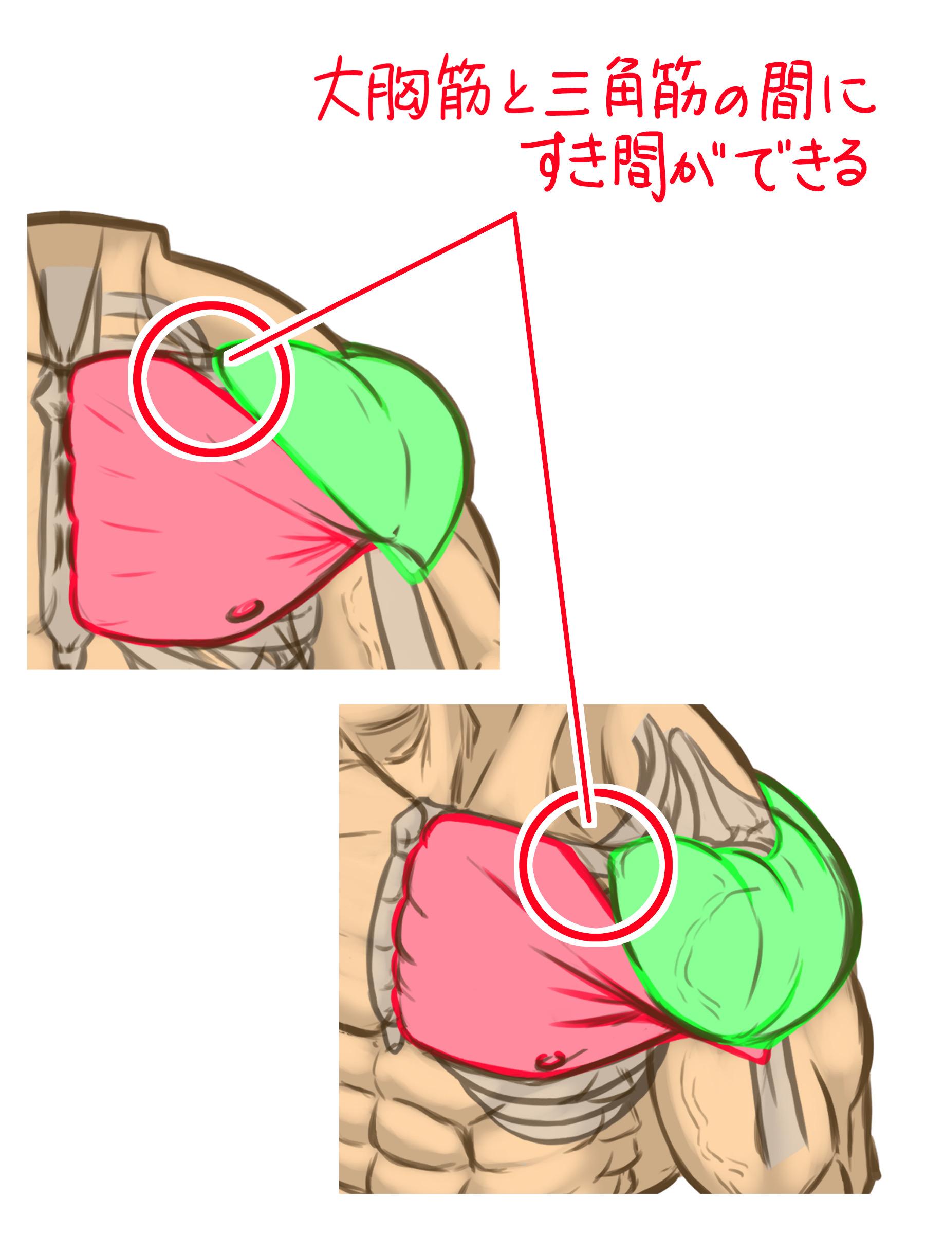 また大胸筋と三角筋の間に隙間があり、少しくぼみができるのもポイント。そこも意識して描くとよりリアルに見えます。