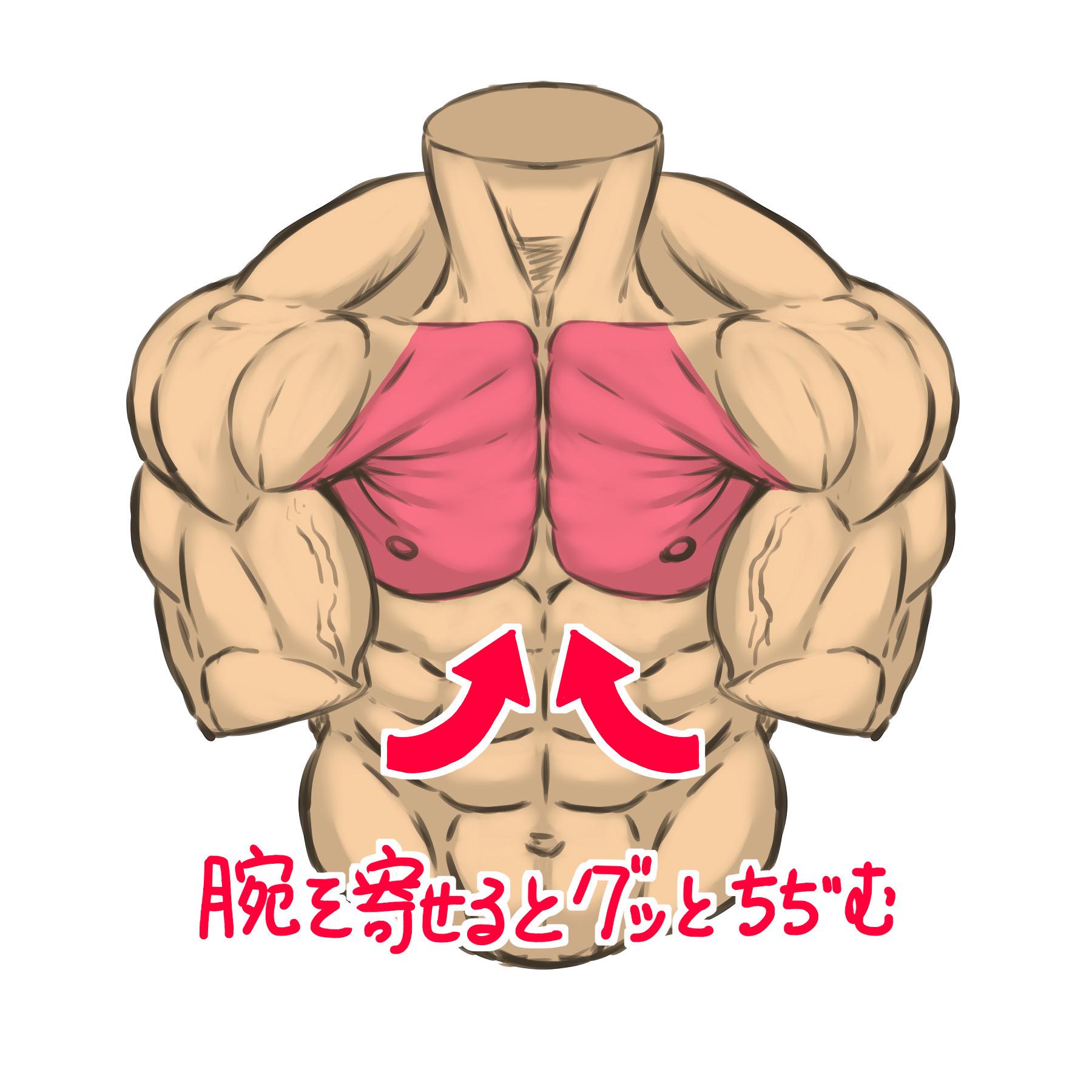 両腕を寄せるために大胸筋の筋肉が縮み腕を引っ張って来ます。このとき、大胸筋の筋肉が重なり合うので脇あたりの位置でえくぼのような凹みができるのもポイントです。 主に大胸筋下部の筋肉が作用する動作です。