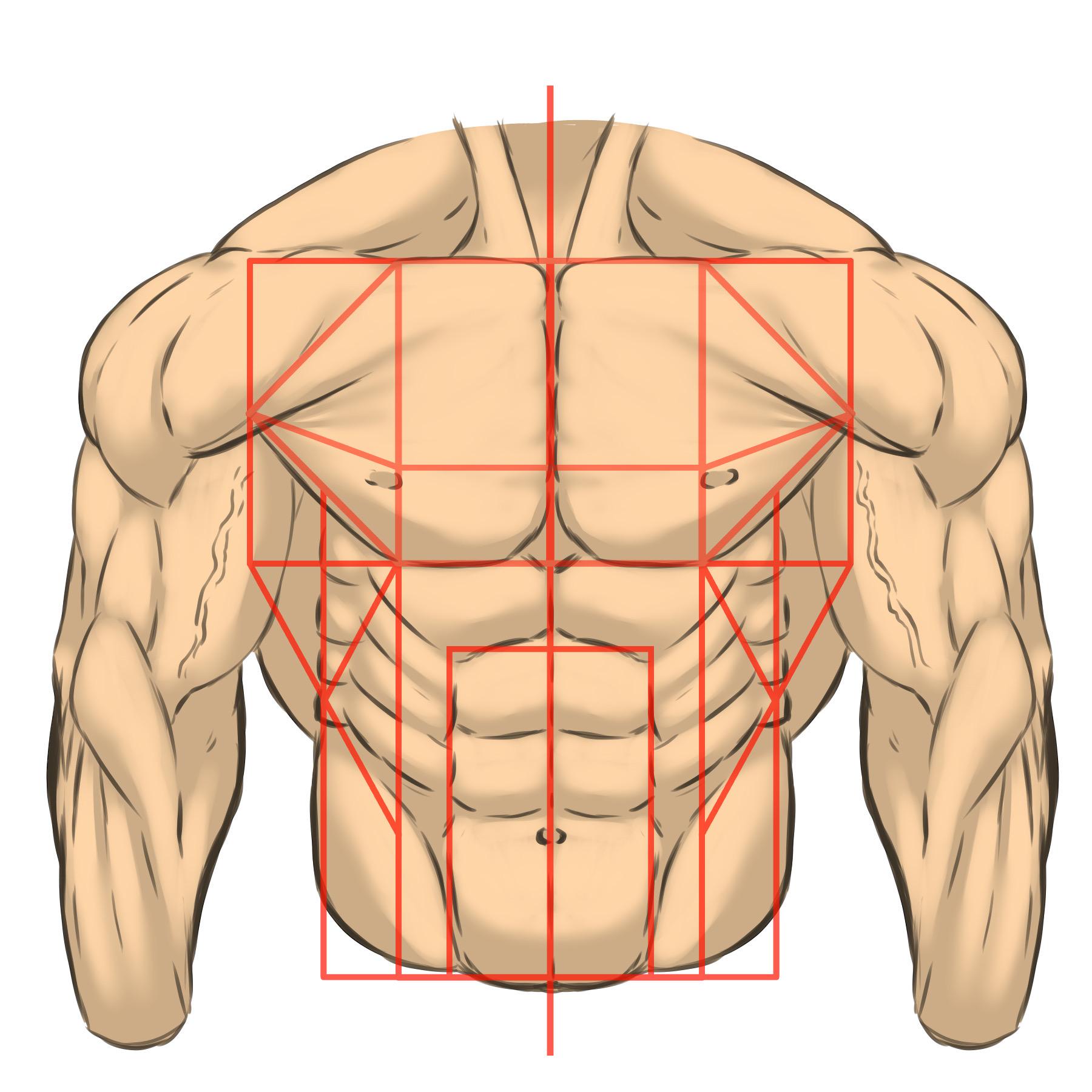 体をそのまま描こうとすると難しいので、このように筋肉を図形にとらえて組み立てると分かりやすくなります。