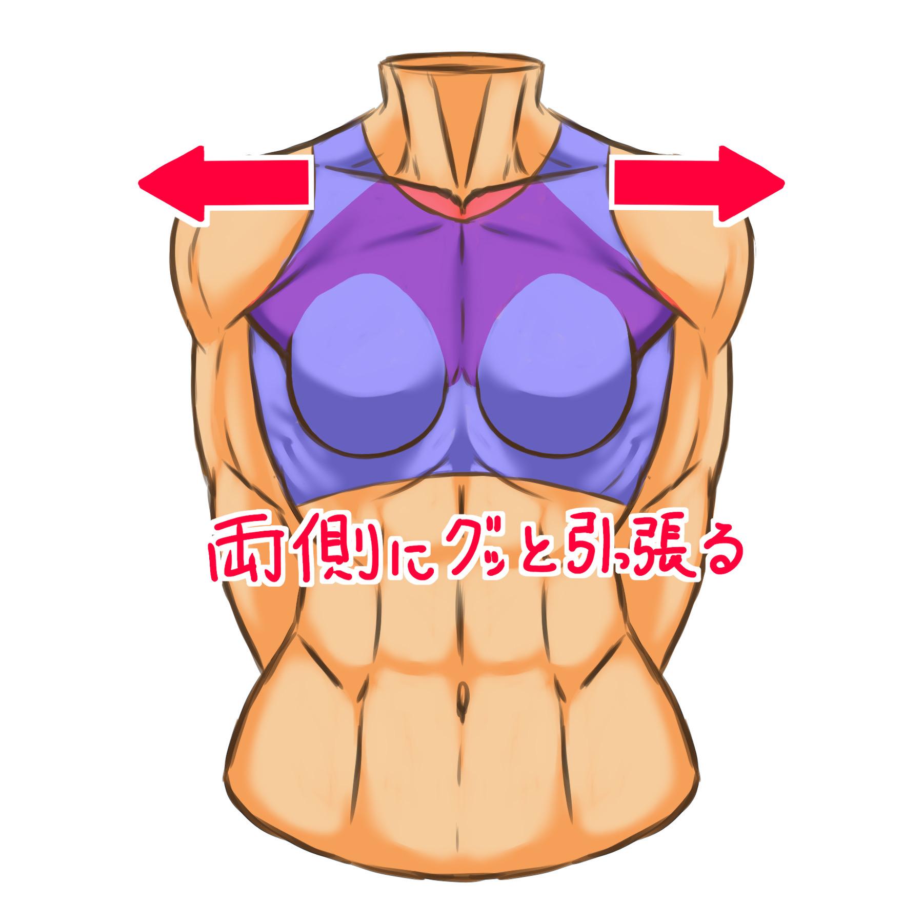 腕を後ろに下げると大胸筋もそちら側に引っ張られます。大胸筋が伸びるのを意識して描くと良いです。主に大胸筋上部と中部の筋肉が作用する動作です。