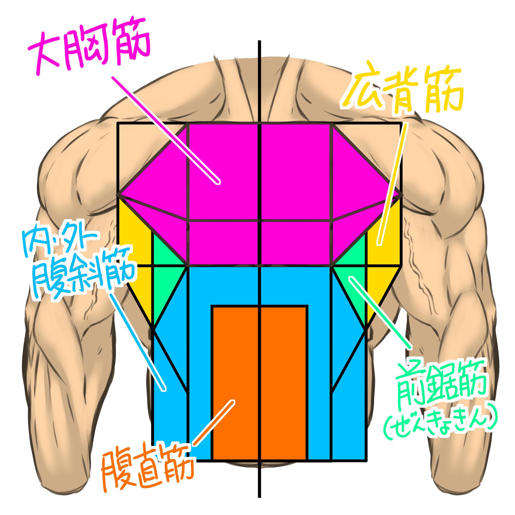 図形で捉えた筋肉を色分けするとこんな感じに表現できます。