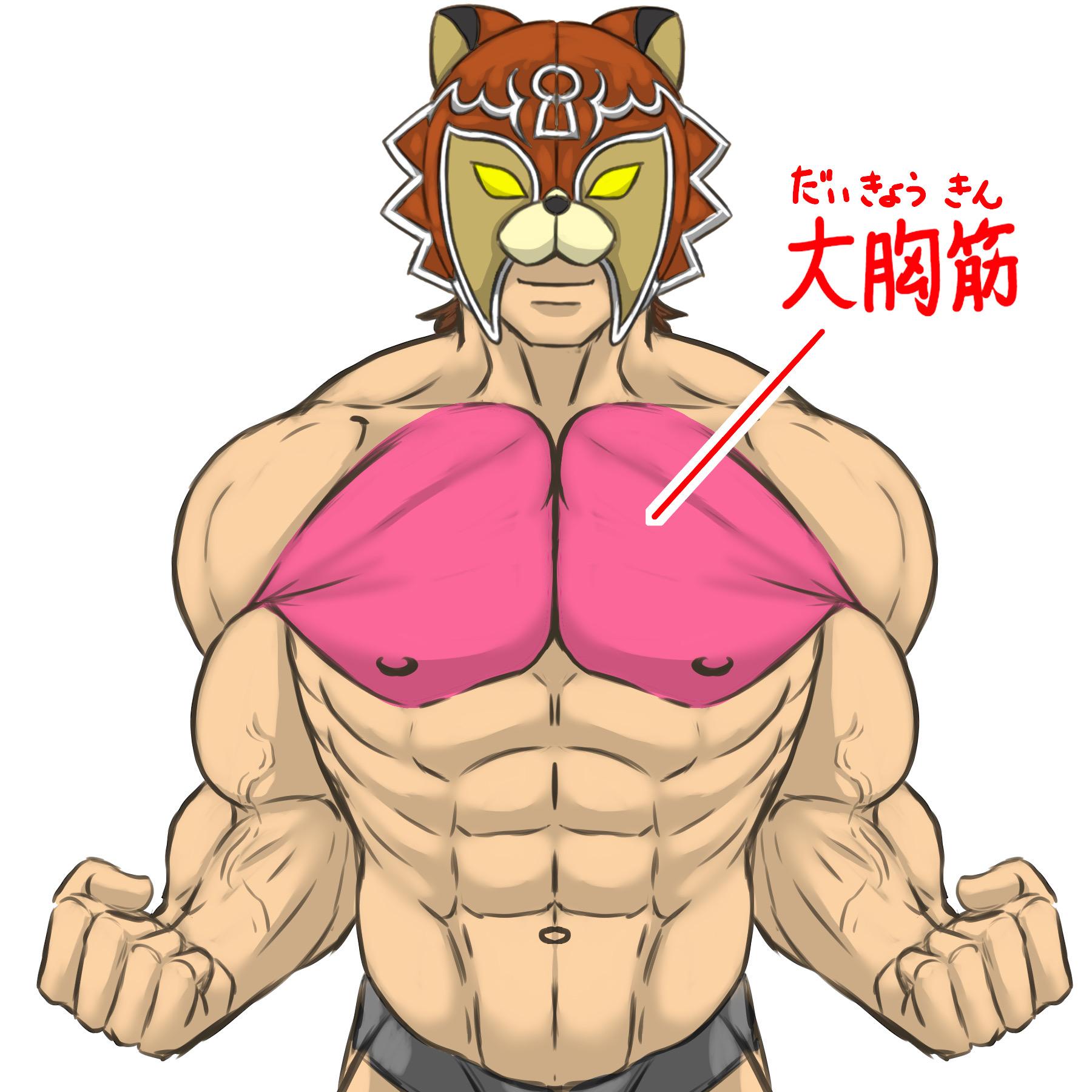 大胸筋のイラスト