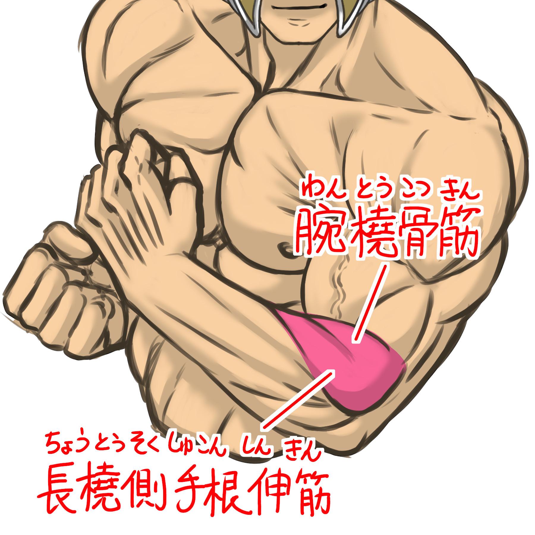 腕撓骨筋と長橈側手根伸筋のイラスト