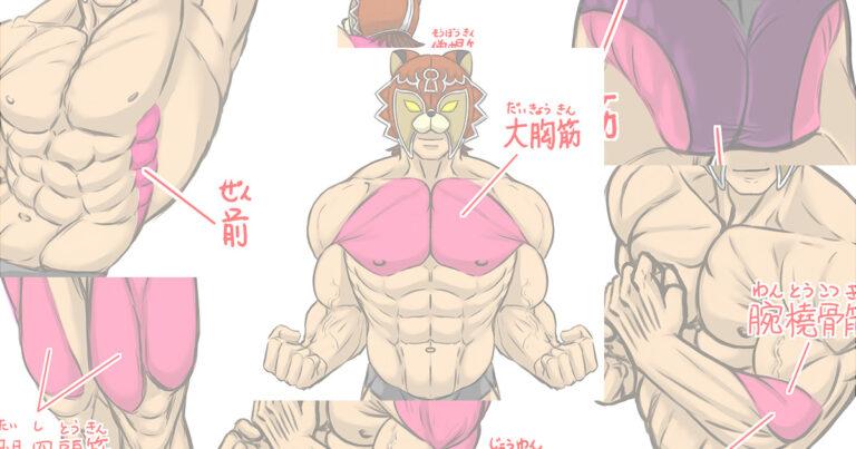 相澤隼人選手の筋肉で見る【かまた的】筋肉のイラストポイント!