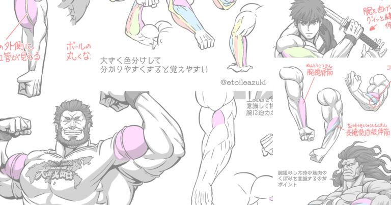 Twitter筋肉の描き方シリーズ『腕の筋肉』